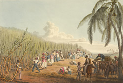 Cutting the Sugar Cane, from 'Ten Views in the Island of Antigua', 1823